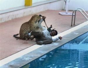 YOUTUBE Leopardo entra in una scuola, panico e 6 feriti