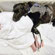 Labrador e bimbo autistico inseparabili anche in ospedale 3