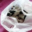 Mamma cane con cuccioli morti nel sacchetto