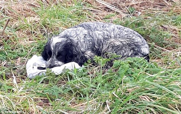 Mamma cane con cuccioli morti nel sacchetto3