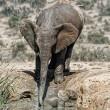 YOUTUBE Mamma elefante salva cucciolo caduto nel fango3