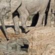 YOUTUBE Mamma elefante salva cucciolo caduto nel fango