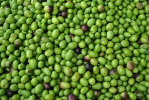 Olive verniciate con solfato rame: sequestrate 85 tonnellate