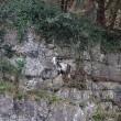 Pompieri salvano capra bloccata nella gola di montagna