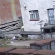 Video YouTube - Orso polare attacca donna