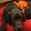 Video YouTube - Fernie, il cane che sa leggere 8