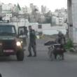 YOUTUBE Polizia Israele fa cadere palestinese da carrozzina 3