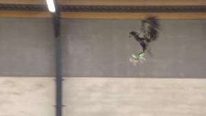 YOUTUBE Aquile reali in volo contro i droni illegali