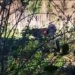 YOUTUBE Roma, pastore lega asina e la violenta a Caffarella