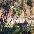 YOUTUBE Roma, pastore lega asina e la violenta a Caffarella 3