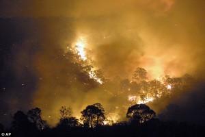 YOUTUBE Australia: nibbio e falco appiccano incendi per…