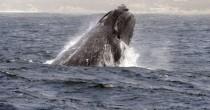 Pornhub, vuoi salvare le balene? Guarda un video hard
