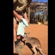 Canguro orfano usa sacchetto come marsupio4