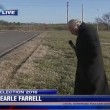 Reporter infastidito da cane interrompe diretta3