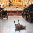 Cane in chiesa durante messa fa sorridere bimbi malati5
