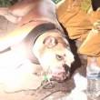 Cane soccorso dai pompieri con maschera ossigeno2