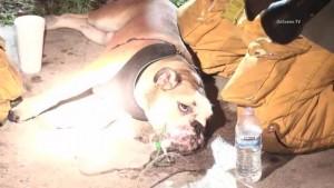 Guarda la versione ingrandita di YOUTUBE Cane soccorso dai pompieri con maschera ossigeno