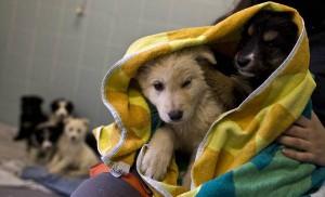 Guarda la versione ingrandita di Camporosso, corsa alla solidarietà per adottore 108 cani (foto Ansa)