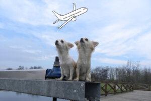 Guarda la versione ingrandita di Viaggiare con il cane non è più un tabu