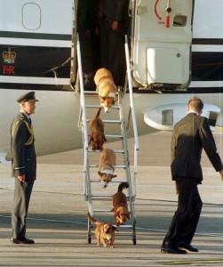 Guarda la versione ingrandita di Vita da cani. Ma della Regina Elisabetta: bistecca, riso…