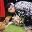 Vita da cani. Ma della Regina Elisabetta: bistecca, riso...02