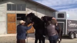 YouTube: Vasco Pirri Ardizzone cade da cavallo imbizzarrito