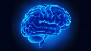 Cervello, differenze tra emisfero destro e sinistro? Un mito
