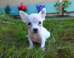 Chihuahua, allarme rapimenti: 3350 scomparsi in un anno