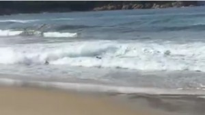 Cinghiale fa bagno in mare all'Isola d'Elba VIDEO Facebook
