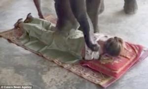 YOUTUBE Elefante massaggia turisti in Thailandia: nuova moda