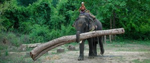 YOUTUBE. Elefanti birmani nervosi e obesi perché disoccupati