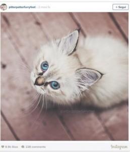 Guarda la versione ingrandita di Festa del Gatto: eventi per festeggiare i mici FOTO
