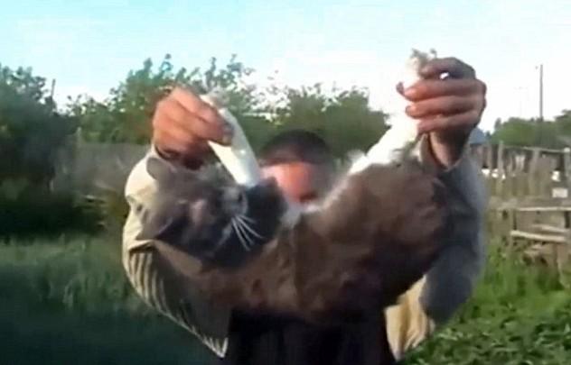 YOUTUBE Gatto torturato e ucciso: ragazzi lo fanno esplodere