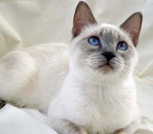 Ladri in casa, gatto evita furto: cane dorme invece