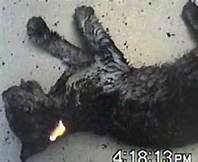 Il gatto bruciato