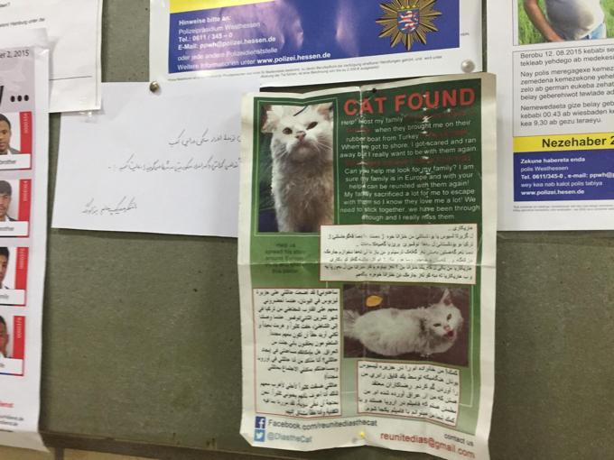 Dias gatto profugo da Iraq: appello per trovare sua famiglia04