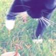 YOUTUBE Mantide religiosa mette in fuga il gatto2