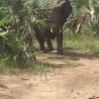 YOUTUBE Elefanti caricano senatore repubblicano Jeff Flake 3