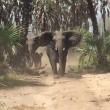 YOUTUBE Elefanti caricano senatore repubblicano Jeff Flake 6
