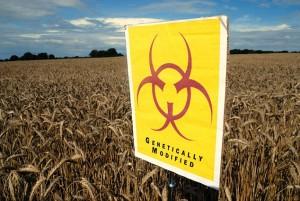 Mangimi OGM, la carne di ristoranti e negozi inglesi ne ha..