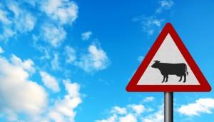 Nuoro, Fabio Settembrini travolge una mucca: morto