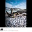 YOUTUBE Fiumi di sabbia per siccità: VIDEO FOTO Po Ticino5