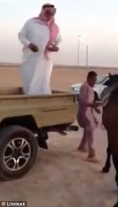 YOUTUBE Saudita obeso prova a montare a cavallo ma…