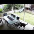 YOUTUBE Serpente velenoso sotto i piedi: cane salva padrone3