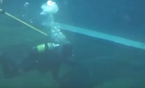 YOUTUBE Squalo attacca sub in acquario: braccio lesionato