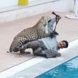 YOUTUBE Leopardo entra in una scuola, panico e 6 feriti 05