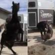 YouTube: Vasco Pirri Ardizzone cade da cavallo imbizzarrito3