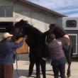 YouTube: Vasco Pirri Ardizzone cade da cavallo imbizzarrito6