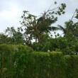 YOUTUBE Fiji, ciclone Winston ne uccide 18. Vento a 350 km/h6