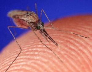 Virus Zika per via sessuale: a Firenze primo caso in Europa